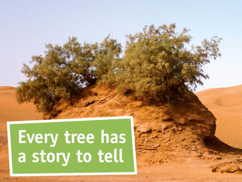 Sahara Roots Foundation